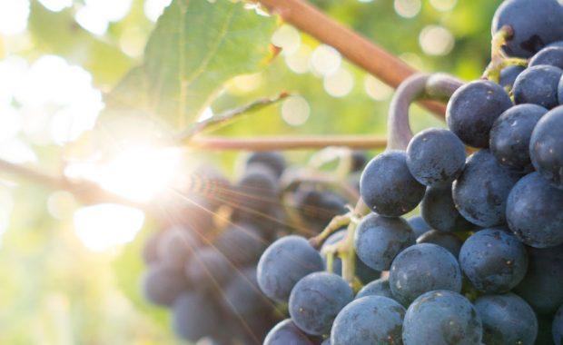 grapevine dallas fort worth dfw best marketing advertising agency